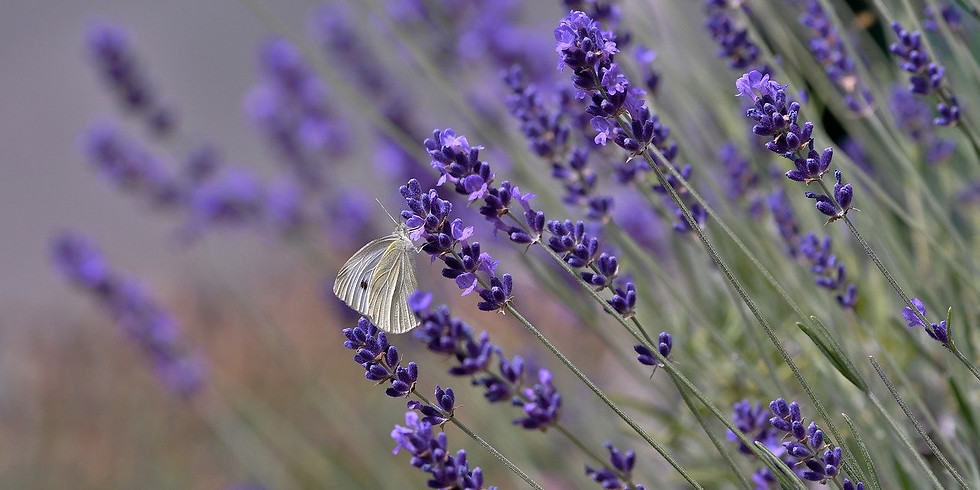 Pollinator Discovery Hunt