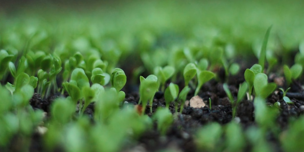 Countertop Produce: Growing Microgreens & Sprouts