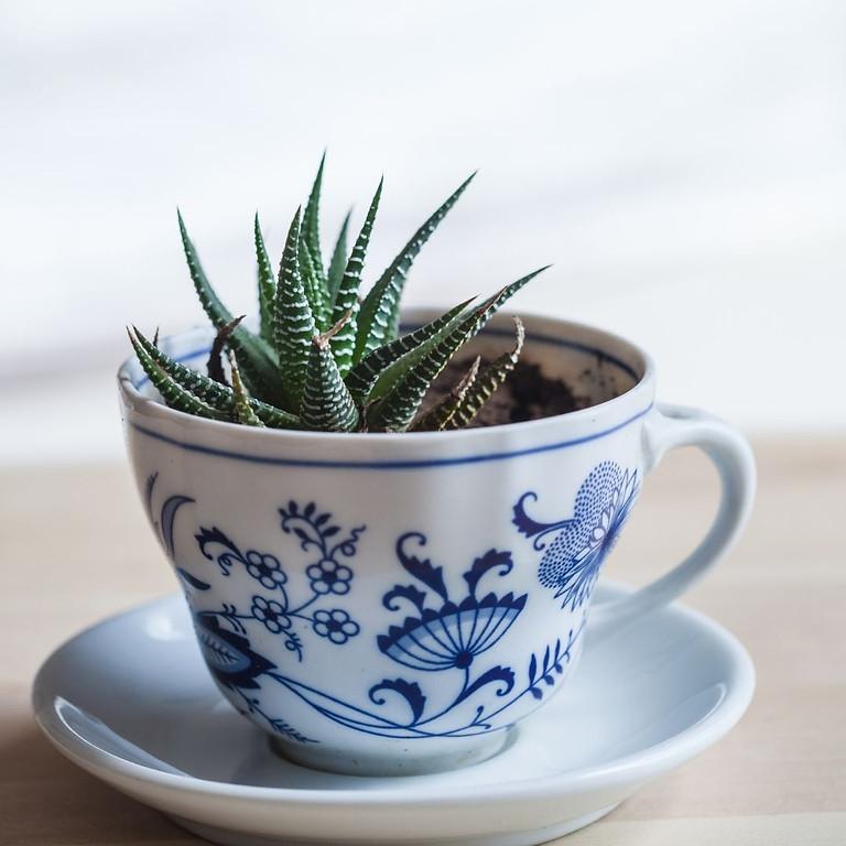 Herb Craft: Tea Cup Fairy Garden