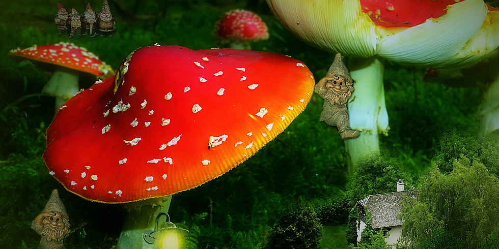 Seedlings: Troll & Fairy Houses for Herbal Kids