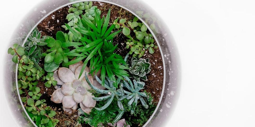 Herb Craft: Terrarium
