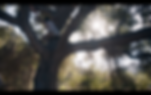 Screen Shot 2020-03-10 at 3.32.54 PM.png