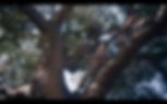 Screen Shot 2020-03-10 at 3.33.39 PM.png