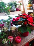 Dekoration Weihnachtsstern Weihnachten Advent Blumen Gunskirchen Blumengeschäft Wildblüte