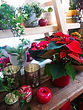 Weihnachtsstern Weihnachten Advent Adventkranz Blumen Gunskirchen Dekoration Wildblüte