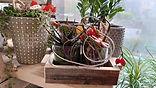 Blumen Gunskirchen Dekoration Herbst