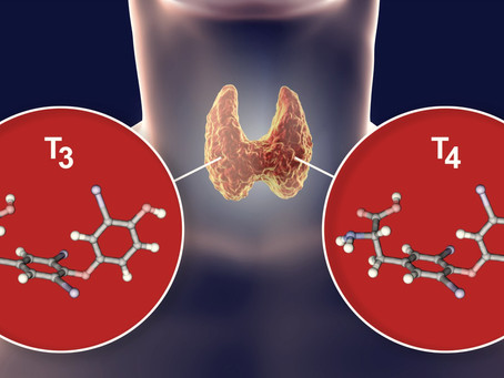 UNDERSTANDING WHICH THYROID HORMONE FORMULATION IS THE RIGHT ONE FOR YOU