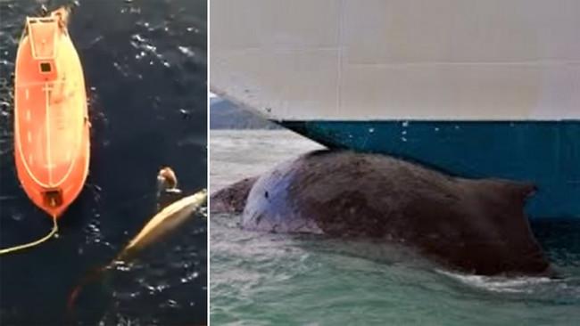 Εξαίρετο μάθημα αλτρουισμού από ναυτικό που βουτάει για να σώσει παγιδευμένη φάλαινα (video)