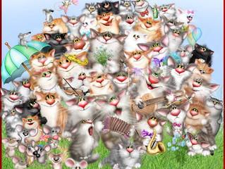 Социальная кастрация и стерилизация кошек в клинике Maxima Vet