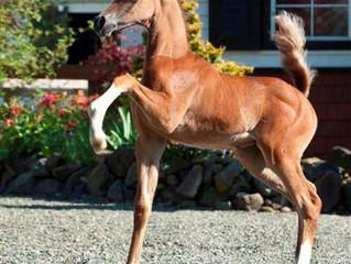 Лошади нужно дать возможность вырасти!