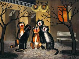 Акция «Мартовские коты»