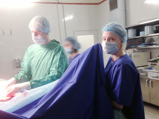 10 апреля: стажировка в клинике Maxima Vet.