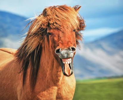 конь улыбается