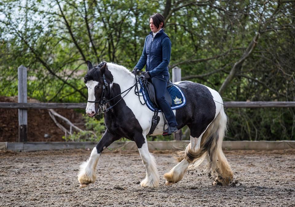 выставка конная россия семинар чувство лошади