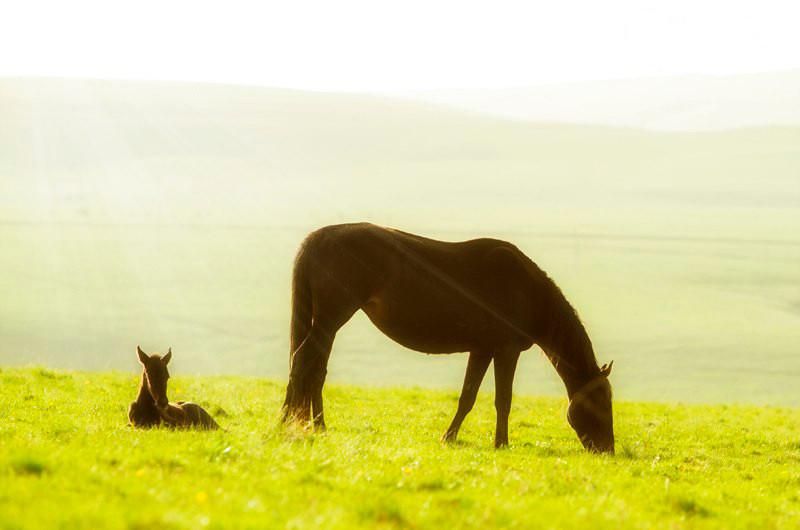 лошадь отдых на траве лугу в цветах весна