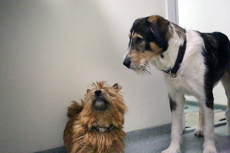 ветеринарная клиники