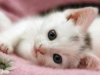 Тревожные симптомы. Как узнать, что котенок заболел?