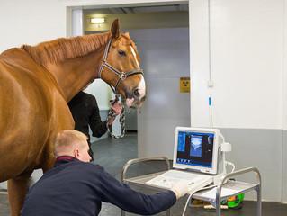 Семинар «Введение в эндоскопию лошадей».