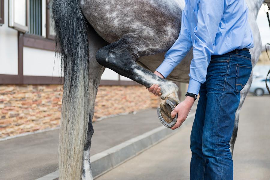 ортопедия лошади