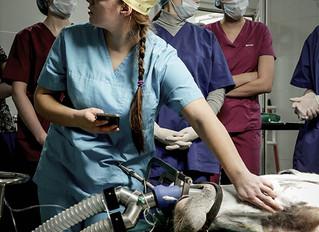 Сонное царство, или седация – это не прихоть ветеринарных врачей!