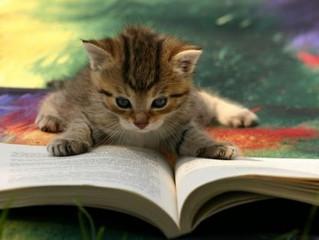 """Раздел """"Библиотека"""". Мы храним самое интересное и полезное."""