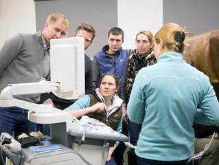 Семинар по диагностике заболеваний коленного сустава прошел в клинике MAXIMA VET