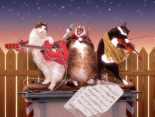 Акция «Мартовские коты» продлена до 30 апреля!