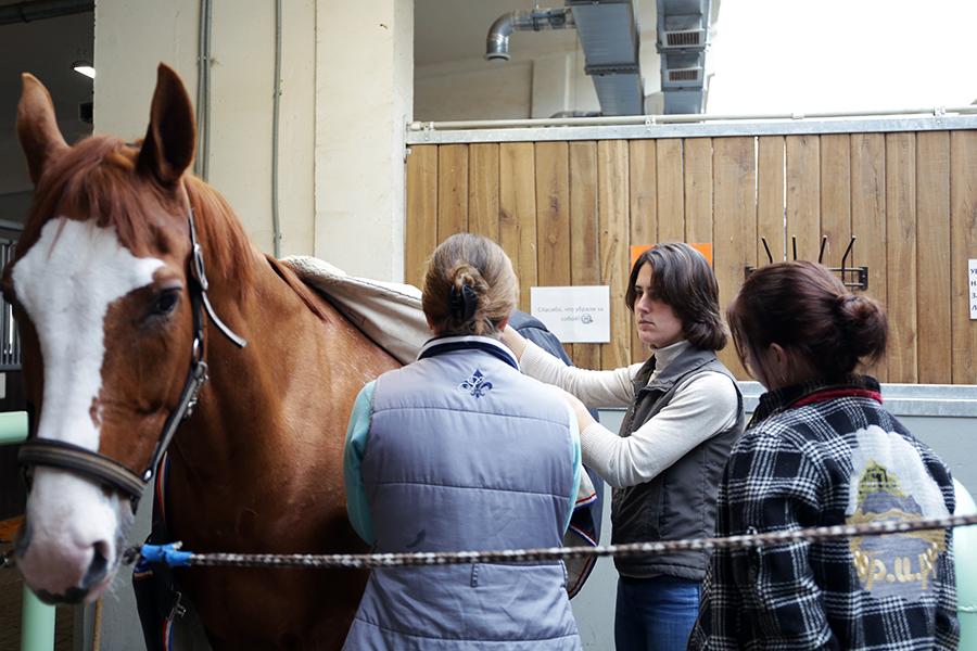 В надевании магнитной попоны на лошадь тоже есть свои секреты.