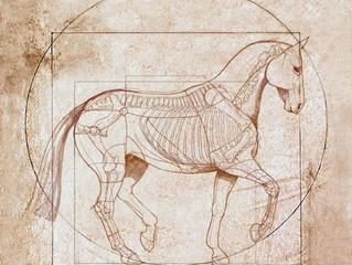 Практический курс «Наглядная анатомия лошади»