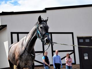 Мобильный конный госпиталь отправляется в город на Неве