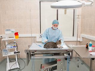 Maxima Vet предлагает полный комплекс ветеринарных услуг для мелких домашних животных