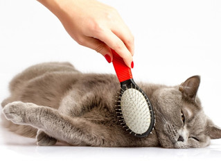 Парикмахерская для кота