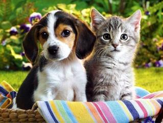 Мобильный госпиталь для мелких домашних животных