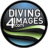 Graham Abbott - Diving 4 Images - logo.p