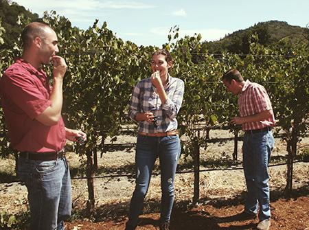 加州認證的永續發展葡萄種植