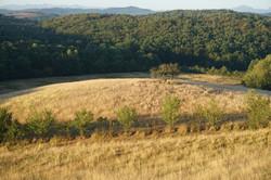 Le bois au bord du domaine