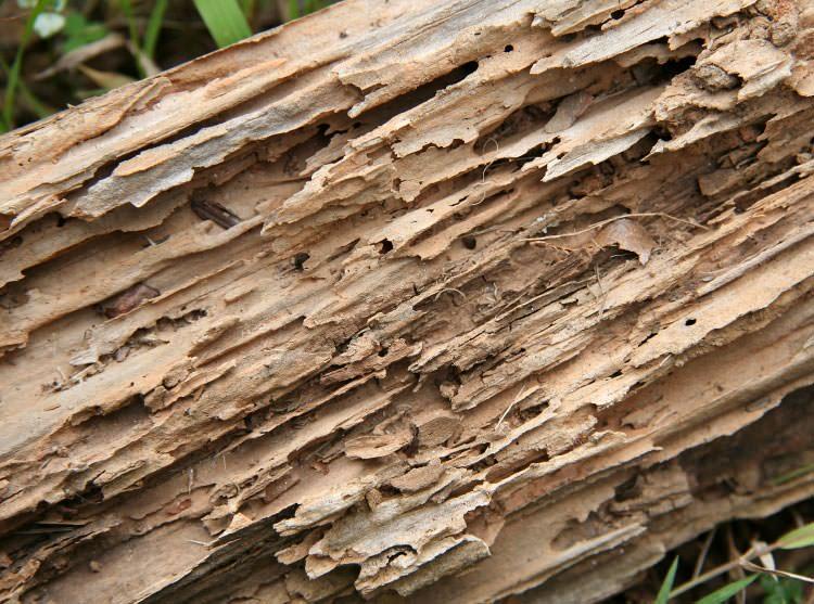termite-galleries-lg
