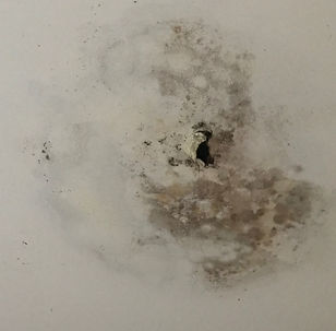 Signs of a roof leak in Building Reports