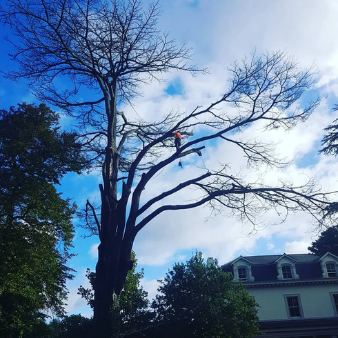 treesurgeryphoto.JPG