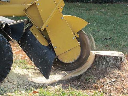 stump-grinding-treescape.jpg