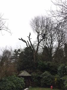 Tree surgeon Solihull, Treescape UK