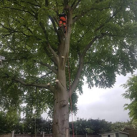 Tree surgeon Birmingham