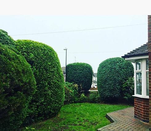 hedges-treescape.jpg