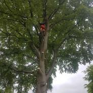 tree-surgery-treescape.jpg