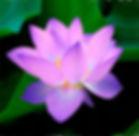 beautiful-bloom-close-up-62681.jpg