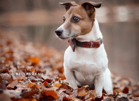 Konfliktstrategien des Hundes (4 F's)