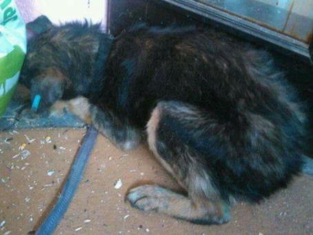 Der Leishmaniose Hund- Der erste Verdacht