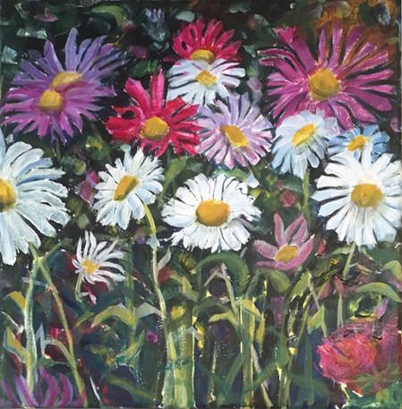 Splashes of daisies