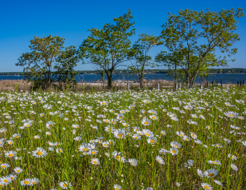 MD Chesapeake Bay Flowers.jpg