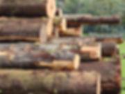 logging2.jpg